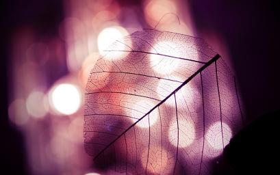 Leaf-Background.jpg