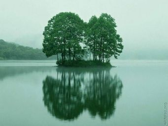 tree-01.jpg