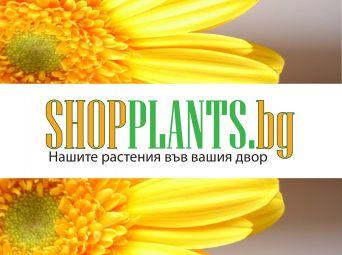 shopplants.jpg