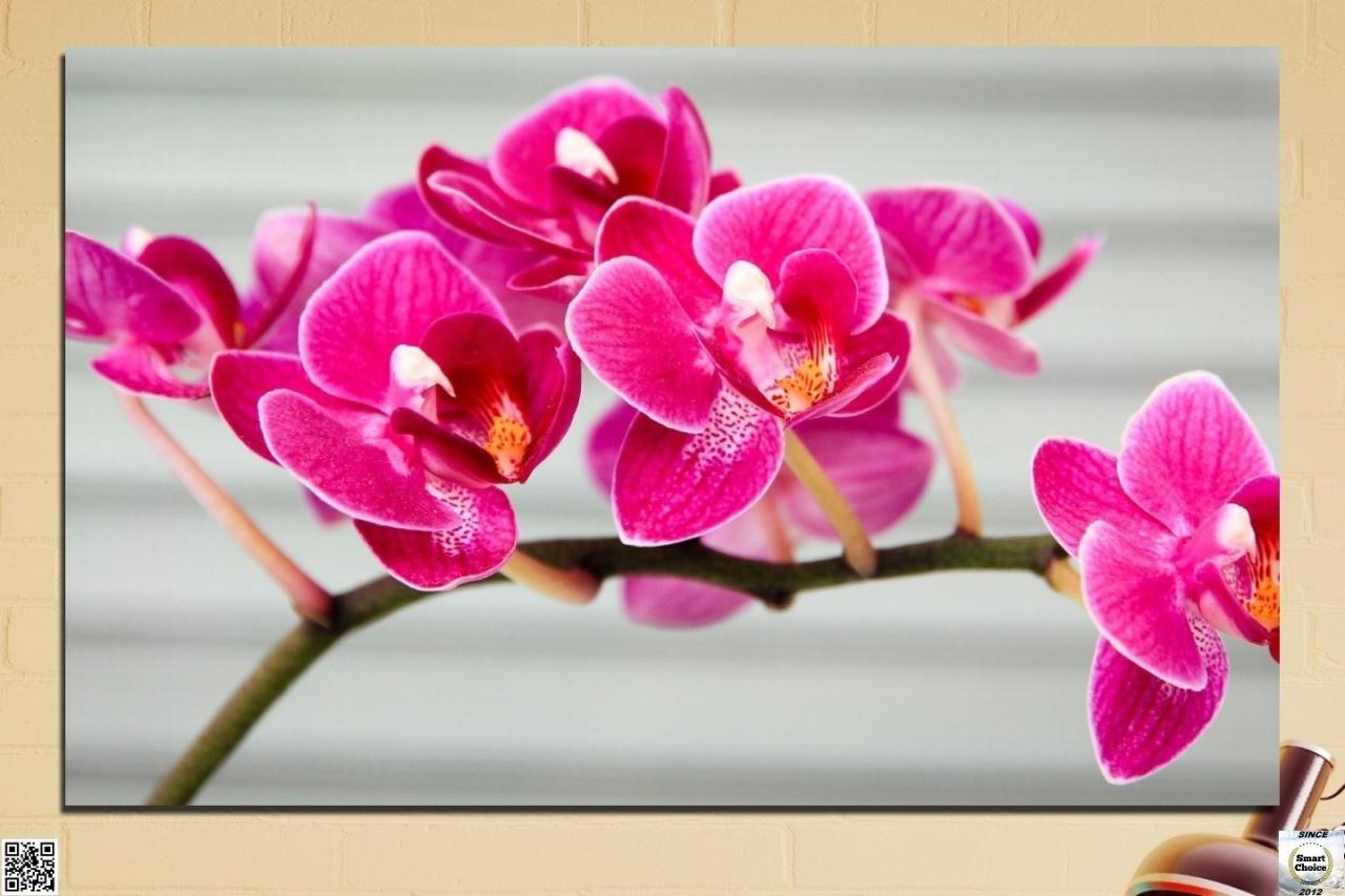 decorativno-pano-za-stena-ot-1-chast-s-klonche-rozova-orhidea-hd-702-11.jpg