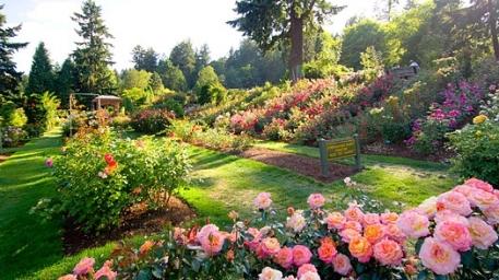portland_rose_garden.jpg