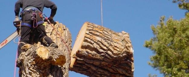 Tree-removal-Melbourne.jpg
